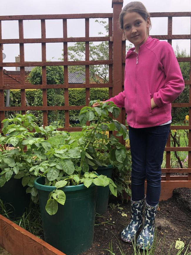 Romilly West with her home-grown potato plant