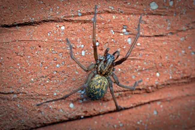 Spider season has started early - and they're coming inside