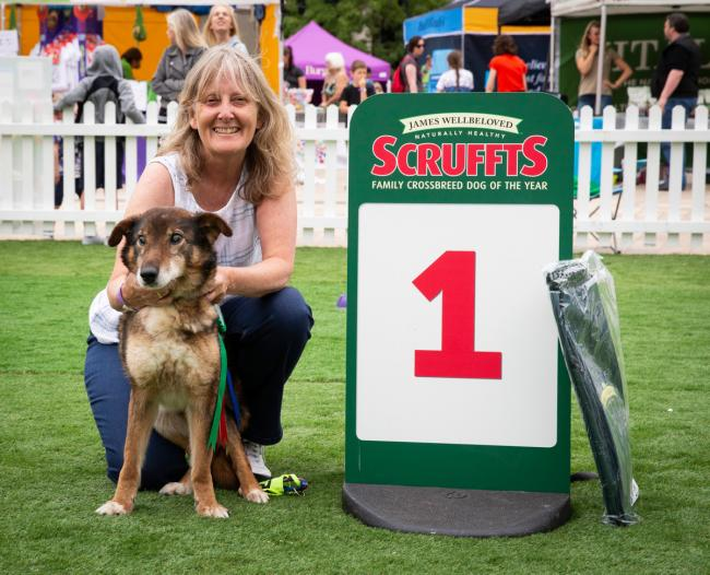 Elmo will go on to compete in the semi-finals at Crufts next year after winning in the Golden Oldie Crossbreed category at Scruffts