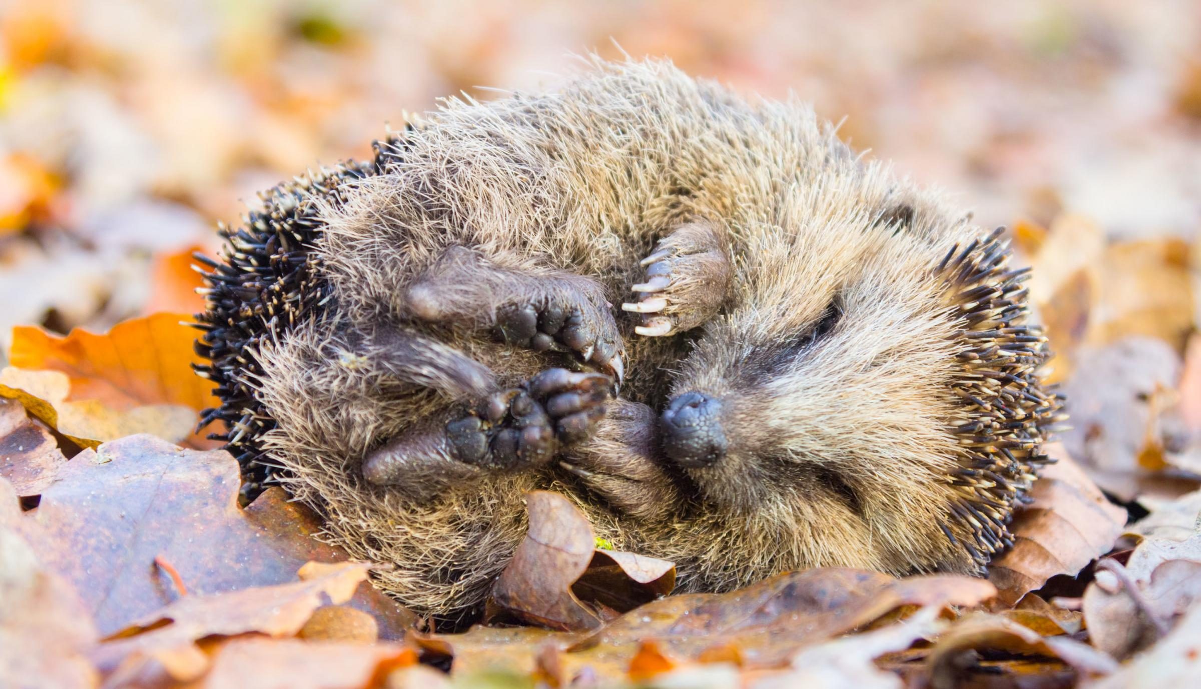 Help wildlife hibernate in your garden this winter by following these easy tips