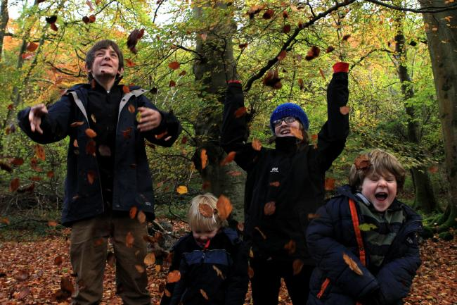 Leaf it out: Families can explore the wild expanse of Warburg in the Chiltern Hills. Pictures: Ric Mellis