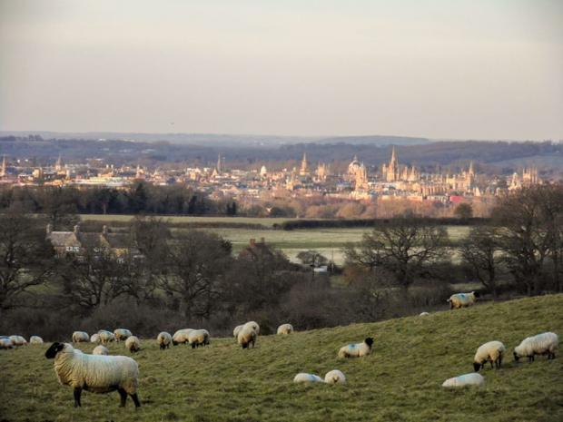 Oxford Mail: Oxford from footpaths Boars Hill. Picture: Roy Pyniger