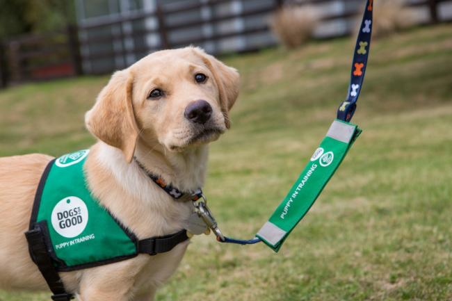 Dogs for Good is seeking volunteers to socialise puppies. Picture: Dogs for Good