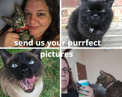 Your marvellous moggies - now send us your pictures