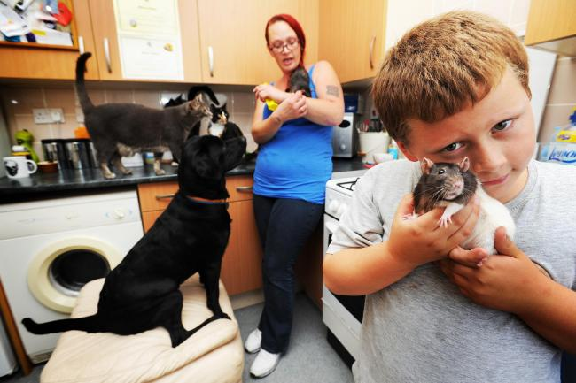 Miranda Wiggins and her son Harry Wiggins shared their Starwort Path home with a small menagerie of six rats, four cats and a black Labrador dog. The council said it was too many and they had to get rid of three cats. Picture: Jon Lewis