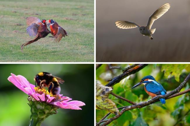 Collection of photo's by wildlife photographer Steve Gozdz.