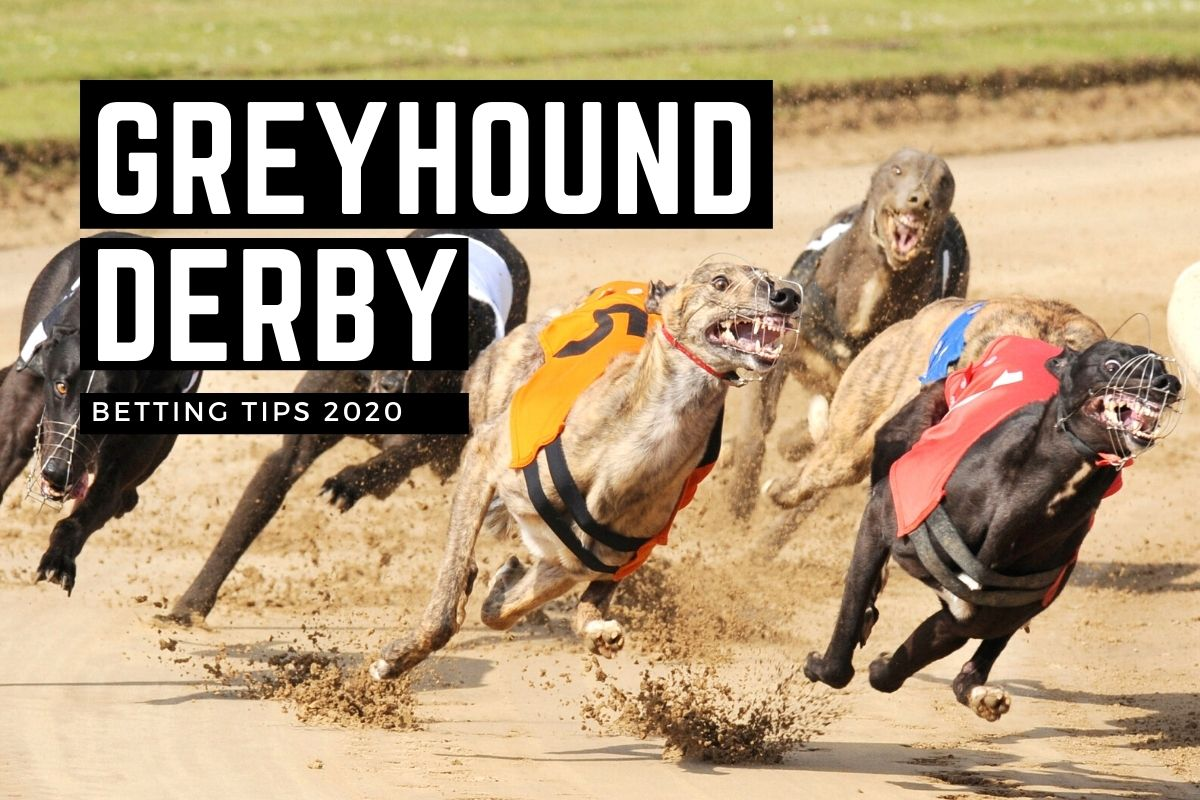 East anglian greyhound derby betting games how to use free bets on betfair