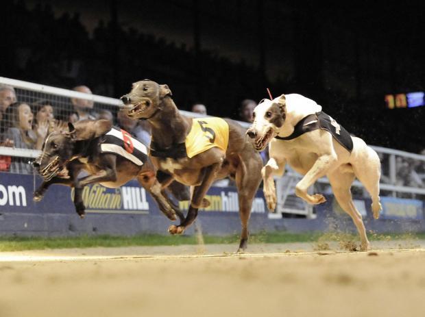 East anglian greyhound derby betting games corridomnia king sport betting