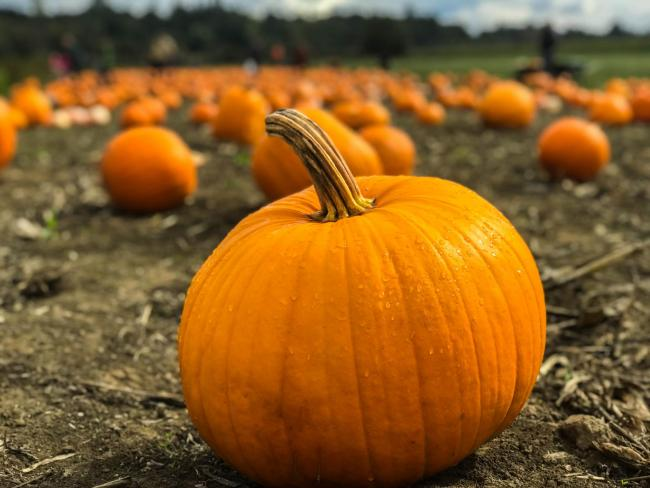 The best pumpkin patches for PYO in and around Oxforshire