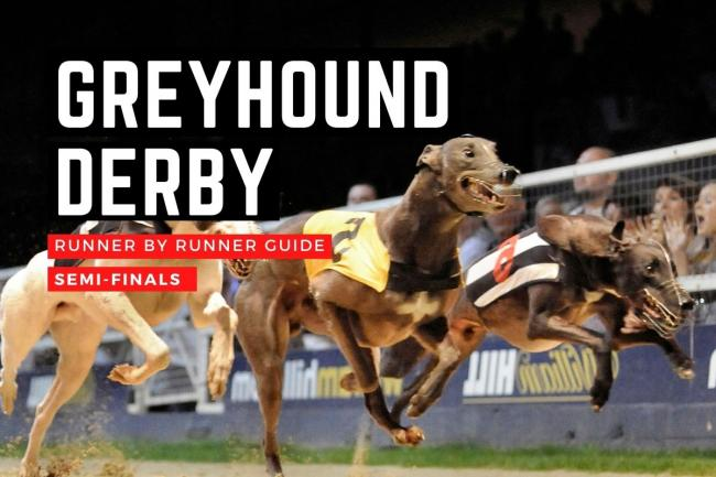 The English Greyhound Derby semi-finals take place this Saturday
