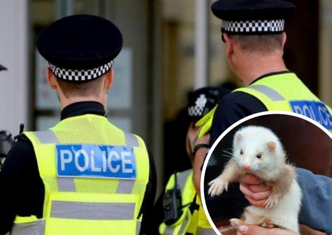 Police rescue  ferrets from illegal poachers