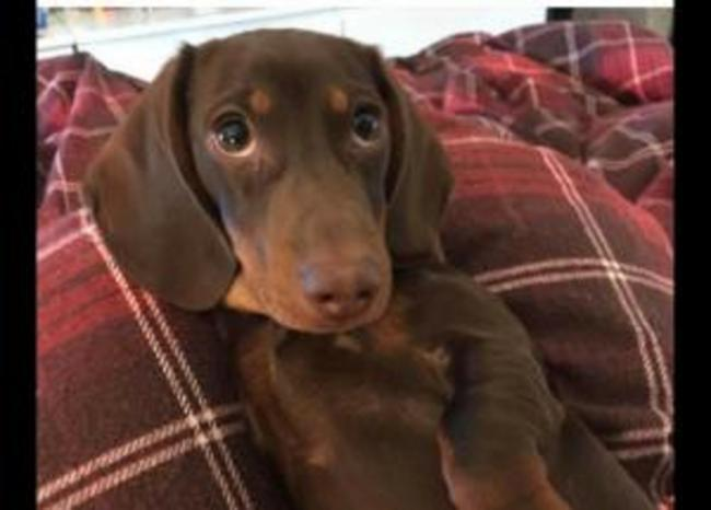 Missing puppy Milo found in Sainsbury's car park