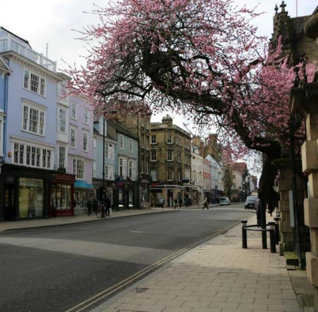 The almond tree in Oxford High Street