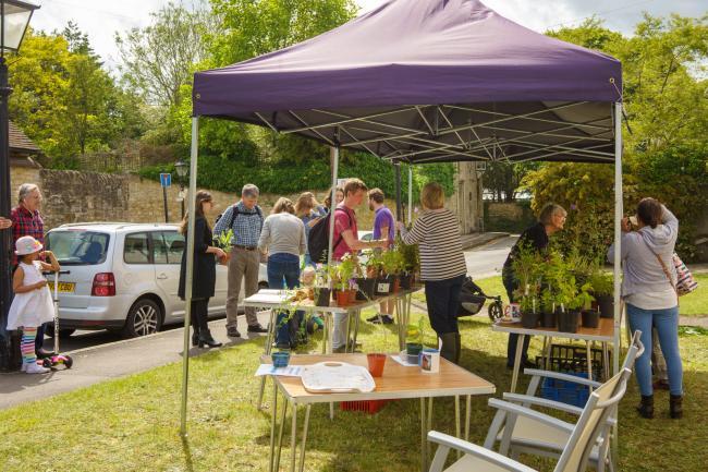 Plant stall at Old Headington Open Gardens