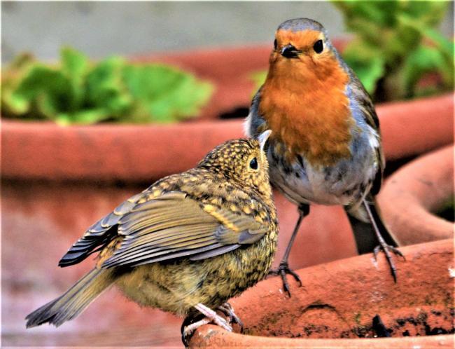 Bird family. Picture: Ian White