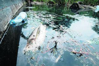 Litterbugs Blamed As 20 Fish Die From Oxford Mail
