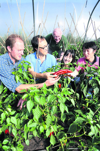 Mark Stay, of North Aston Organics, shows off his red peppers to Stephen Cho, Geoff Todd, Minji Kim and Wonsik Jung
