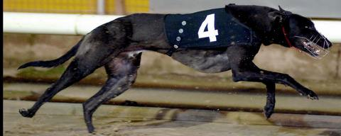GREYHOUNDS: Shock as Pawseys Pride dies