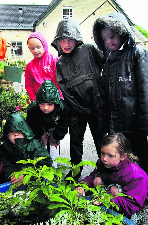 Pupils' garden skills assessed in contest