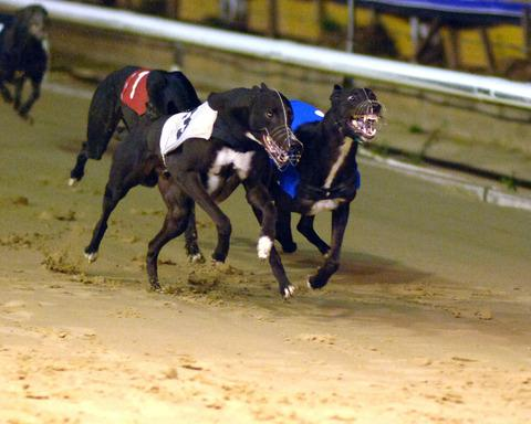 Zodiac Zeus (2) looms upsides early leader Warning Sign (3) before going on to win his heat in the Oxfordshire Stakes on Saturday