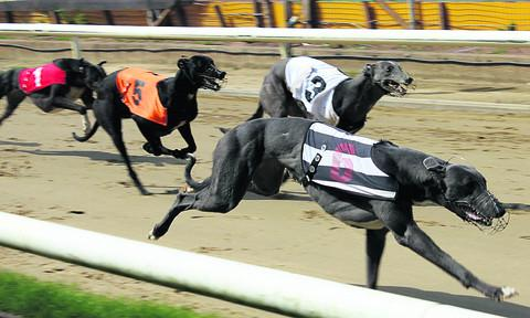 Cowley dog racing betting frank schaeffler bitcoins