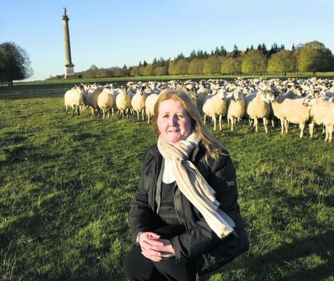 Blenheim Palace estate's wool idea is a real money spinner