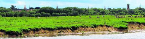 Oxford Mail: Port Meadow pictured in June 2001