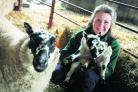 Pleased to meet ewe: Anne Gow with the newborns