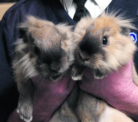 Dog walkers found these two rabbits in Risinghurst on Monday night