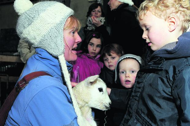 EDUCATIONAL: Mum Catherine shows son Lewis a new lamb