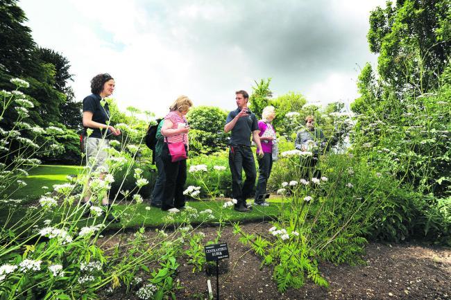 Gardeners get set for summer at Botanic Garden | Oxford Mail