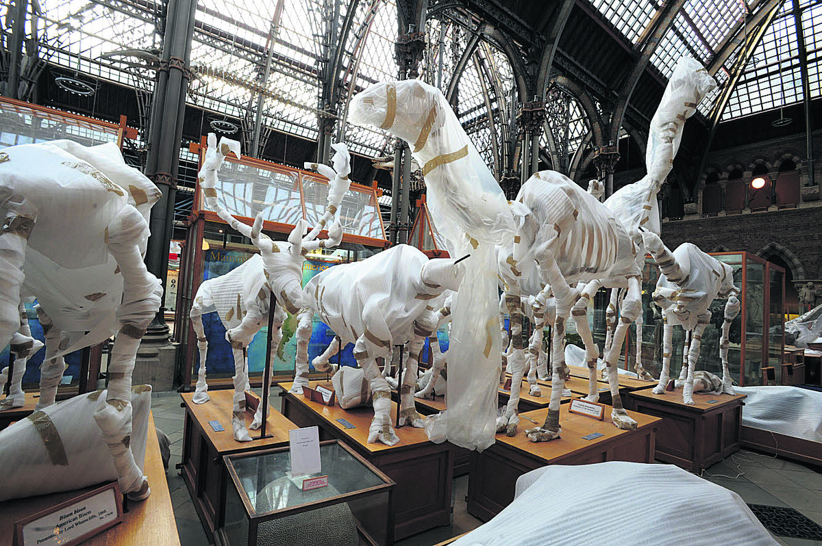 Some of the wrapped-up animal skeletons