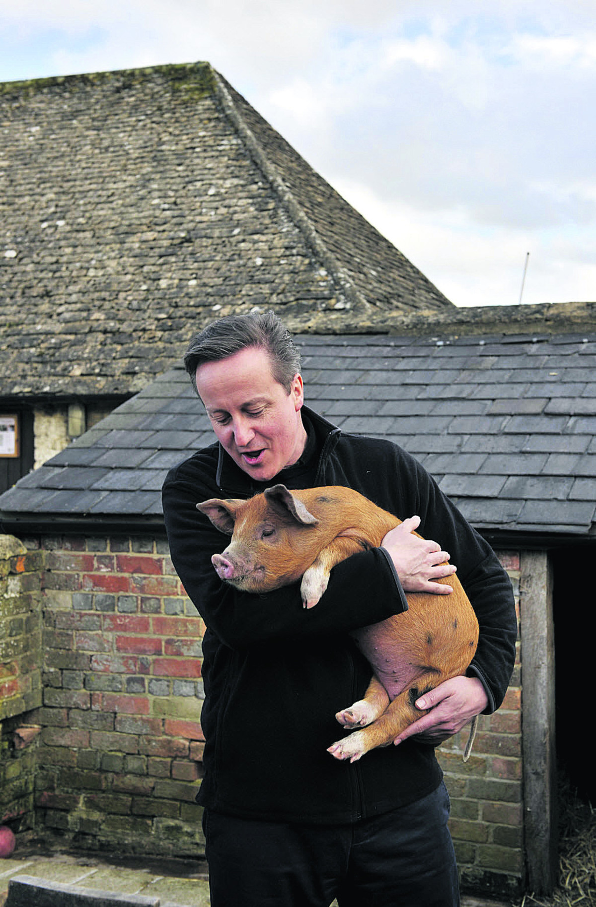 David Cameron with one of the piglets. Picture: OX66114 Mark Hemsworth