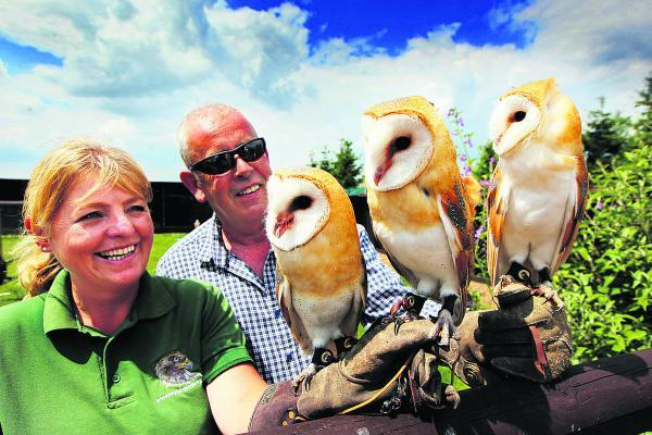 Oxford Mail: Jayne and Clive Jones with the baby owls