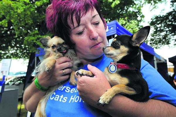 Ali Taylor, of Battersea Dogs & Cats Home with Chihauhaus Nancy and Betty