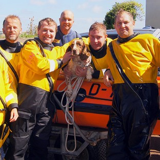 Sprig, pictured with his rescuers, was reunited with his owners after spending more than a