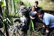 Nimbus the leopard cub enjoys the company of Jamie Craig and his son Jai, 13, and daughter Niemi, 10, in his new enclosure at the Cotswold Wildlife Park