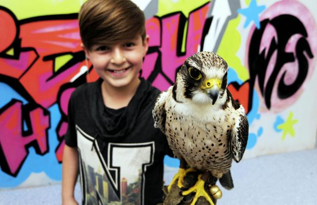 Getting the bird: Cameron McDonald, 10, with Chaos the peregrine falcon