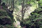 The other-worldly landscape of Puzzlewood