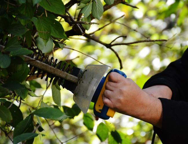 Man needed surgery after burglar flung hedge trimmer at him