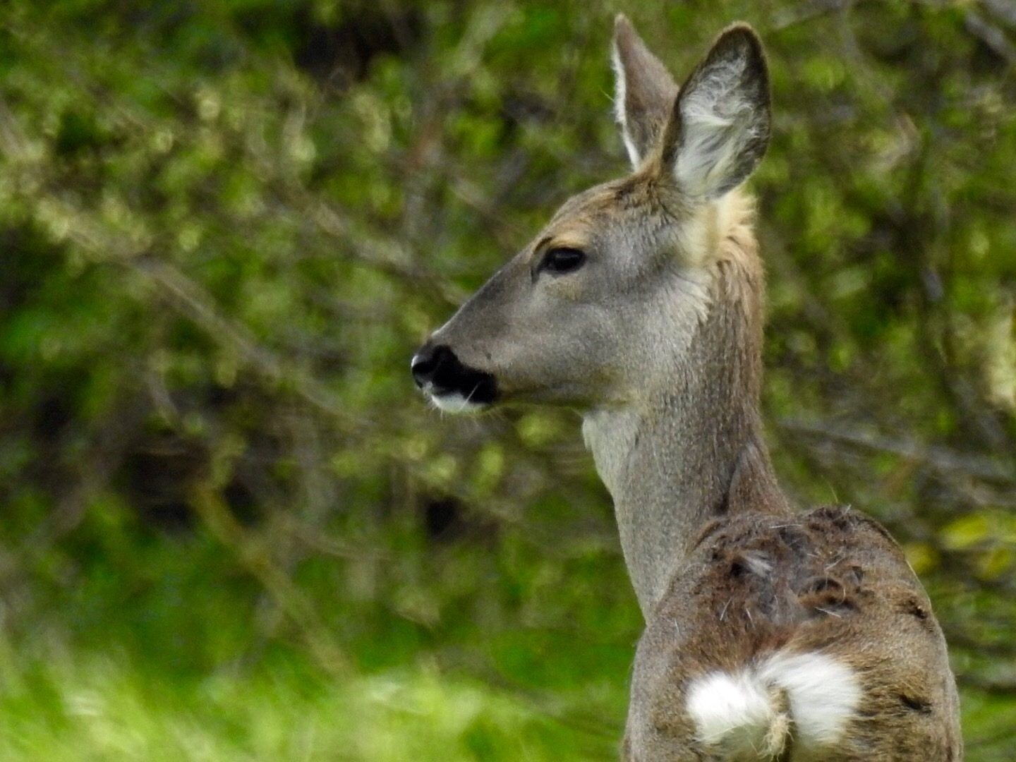 Photo of a deer by Oxford Mail Camera Club member Duncan Becker of Cumnor.