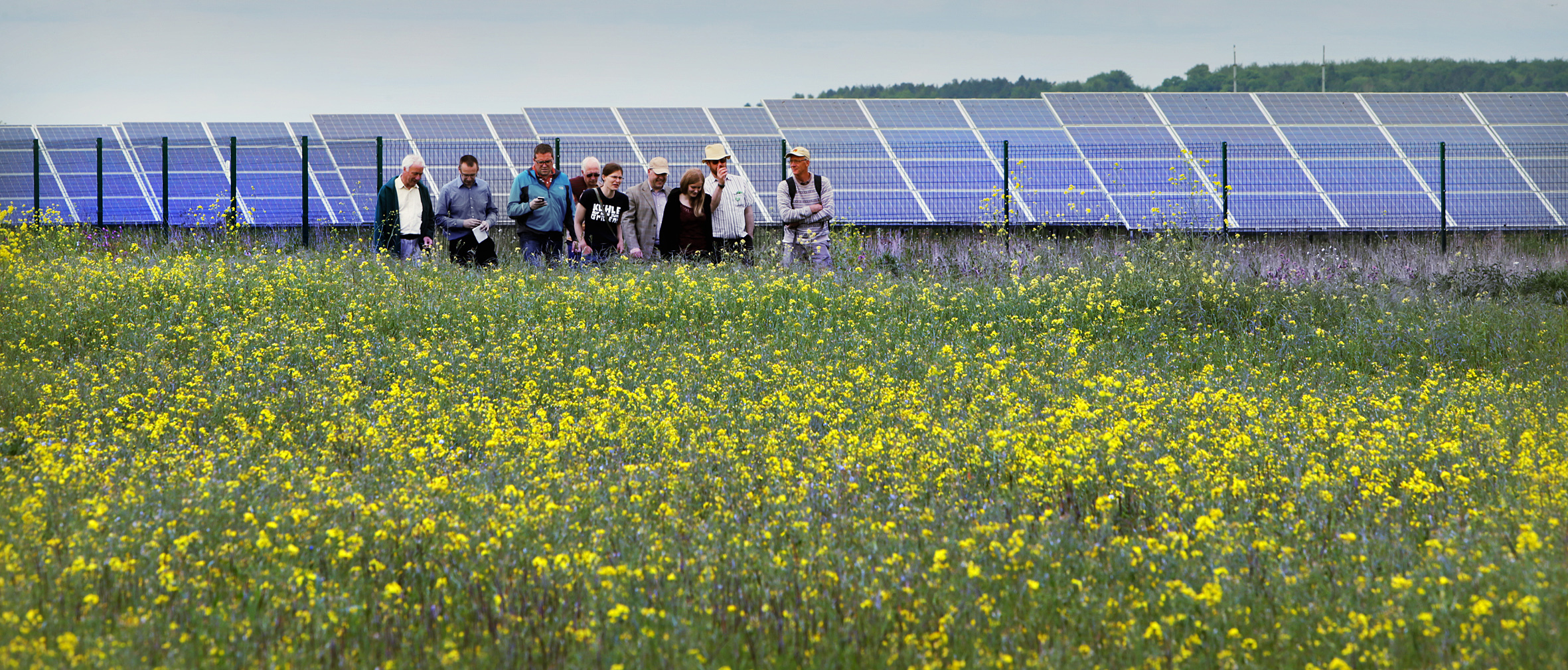 Visitors get a guided tour of Westmill Solar Park in 2014. Picture: Damian Halliwell