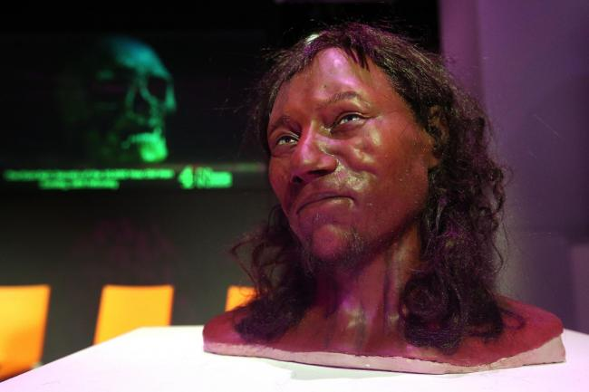 Full facial reconstruction model based on the skull of Cheddar Man, Britain's oldest complete skeleton. (Jonathan Brady/PA Images)