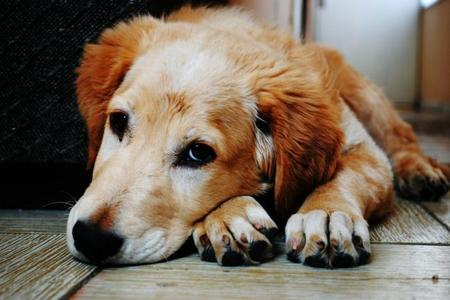 New case of deadly dog disease in Oxfordshire