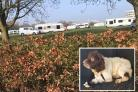 Travellers near the Harwell Campus. Main pic by Mary Foxall. Inset: The spaniel found alive in Bicester, now recovering at the vet