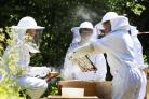New school Apiary Club at the Oxford High School. Students are pictured in their bee suits checking on the new hive that arrived 1-week ago.22.6.2018PICTURE BY ED NIX