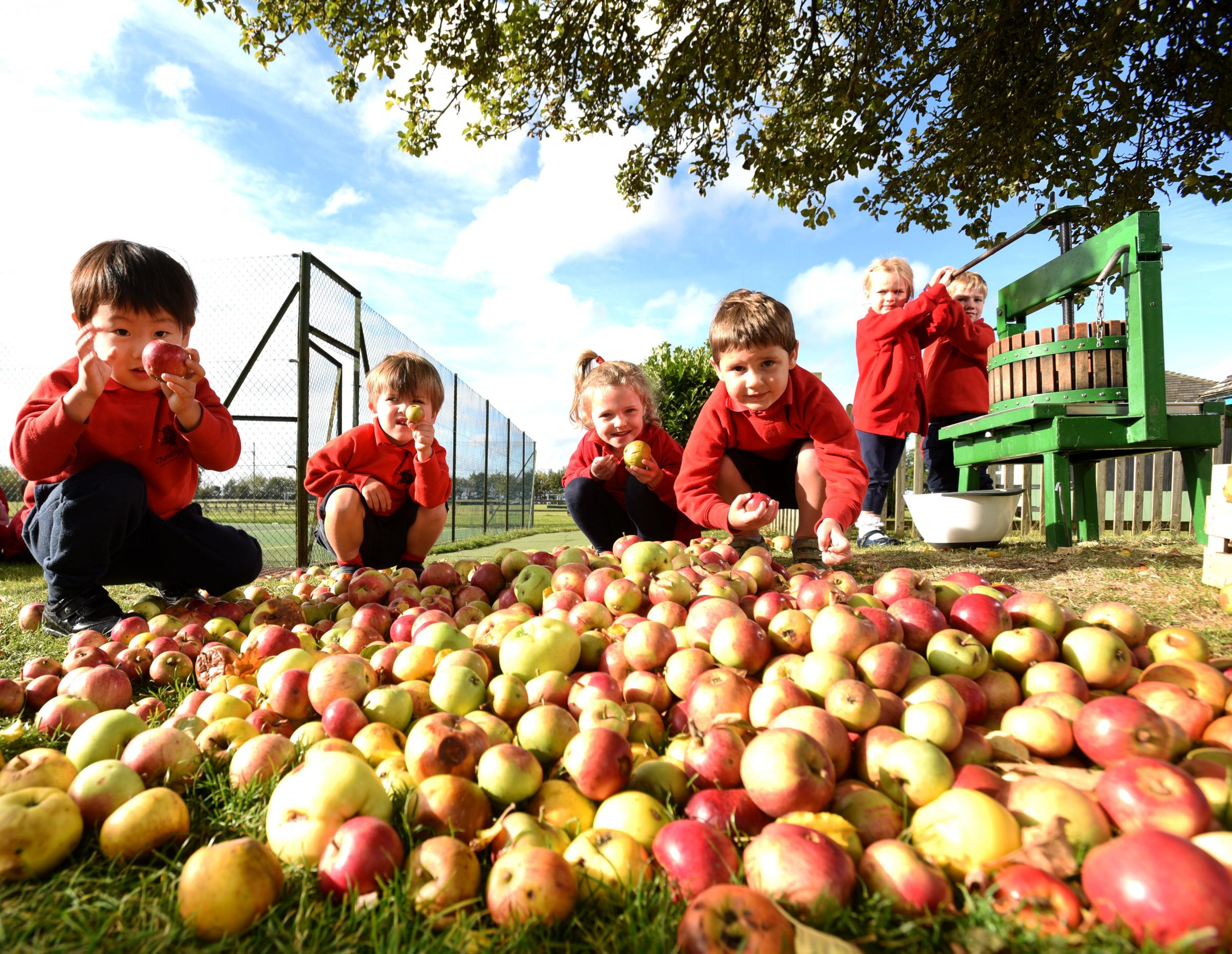 Nursery children at Chandlings Prep school getting ready to press apples to make their own apple juice...Picture Richard Cave 28.09.18.