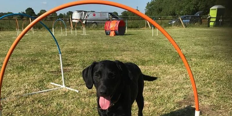 Hoopers Dog Agility Training Classes: Witney