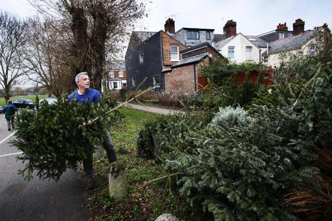 How to get rid of your Christmas tree - How To Get Rid Of Your Christmas Tree In Oxfordshire Oxford Mail