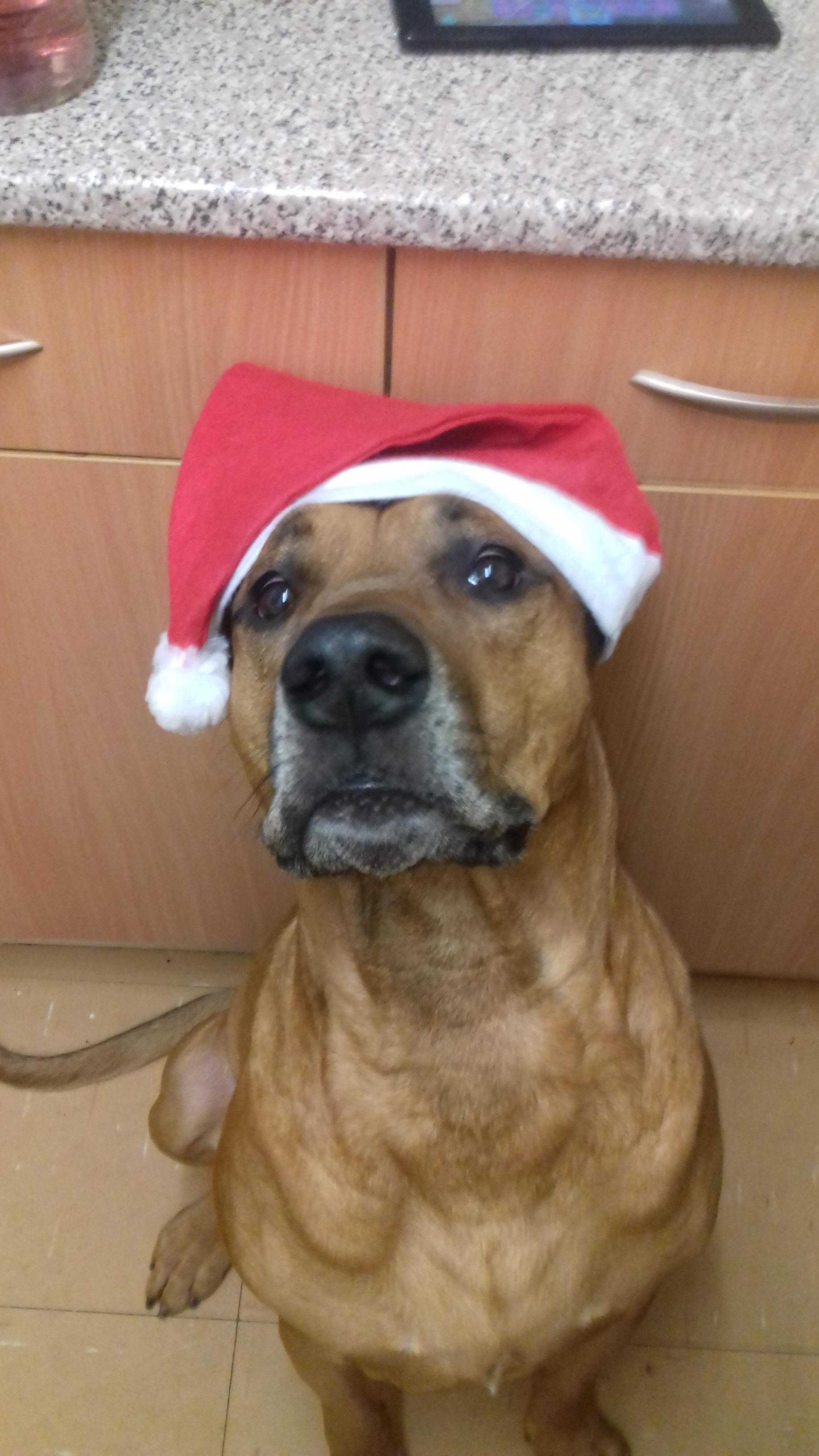Oxford Mail: kash our Ridge back cross getting festive